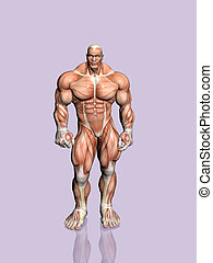 Anatomy anatomical biology body health human naked male Clipart and ...