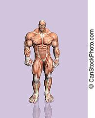 Anatomy anatomical biology body health human naked male Stock Photo ...