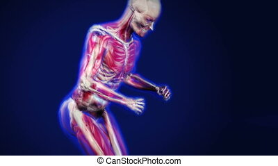 3d dolly shot of an x-ray man running, showing muscles and bones.