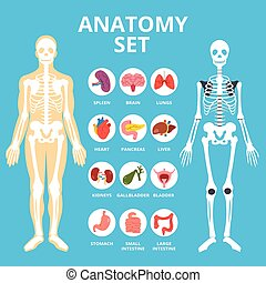 Anatomy set, anatomy infographics
