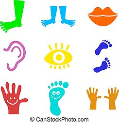 collection of colourful body part icon shapes