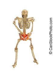 anatomy skeleton human symtom low back pain