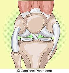 Anatomy. Structure knee joint vector pop art design