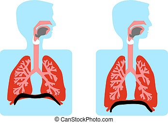 Anatomy Vector Medical illustration, human lung, Chest Cavity, pulmonary system
