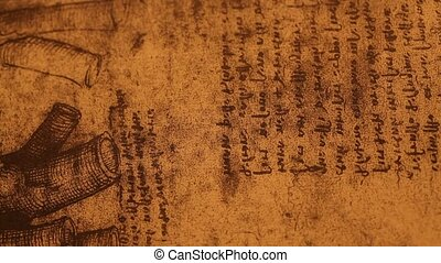 14th century?anatomy?art by Leonardo Da Vinci ??