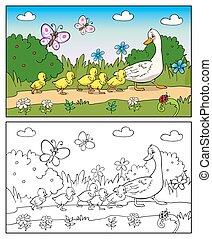 anatra, ducklings., coloritura, book., madre