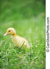 anatroccolo, erba verde