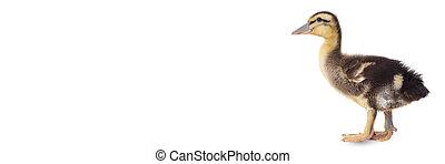 anatroccolo, sfondo bianco