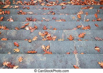 ancho, piedra, escalera, con, caído, otoño sale