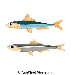 Anchovy Fish Vector Illustration. Peruvian Anchoveta. -...