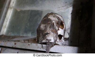 ancien, abandonnés, crâne, espace, maison, 4k, copie, cobweb.