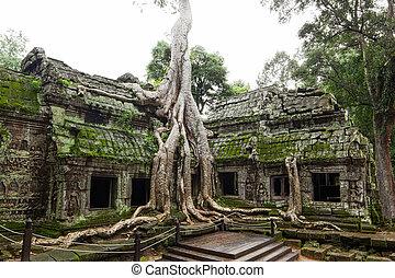 ancien, cette, prohm, ou, rajavihara, temple, à, angkor,...