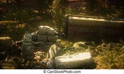 ancien, ruiné, pierre, envahi, usines, maison, fougères, 8k