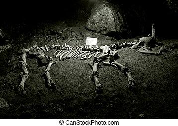 ancien, squelette