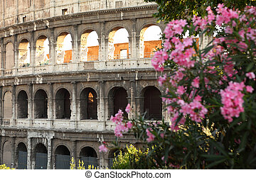 Ancient amphitheater Colosseum in Rome. shrub with pink flowers