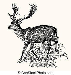 Vector engraving image of ancient animals - deer
