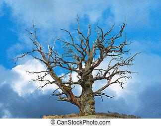 oak tree on bright blue sky