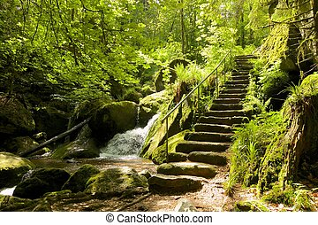 Ancient Black Forest hiking trail through the woods of...