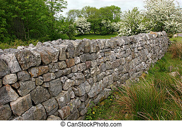 Ancient dry stone wall set amongst rural countryside with hawthorn trees in blossom in the summer. Set in the Brecon Beacons National Park, Wales United Kingdom.