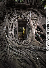 Ancient Buddha statue in old church which covered by banyan ...