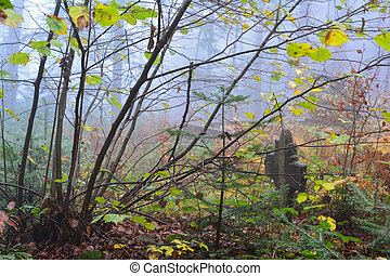 Ancient cemetery in the middle of the misty forest