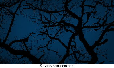 Ancient Gnarled Tree Branches On Stormy Night
