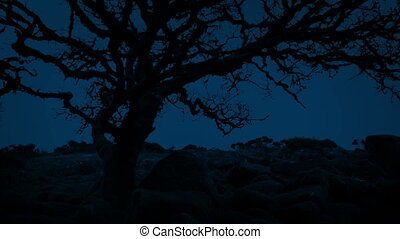 Ancient Gnarled Tree On Windy Night - Very old tree in...