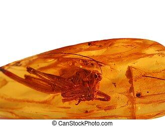 amber - Ancient grasshopper for amber