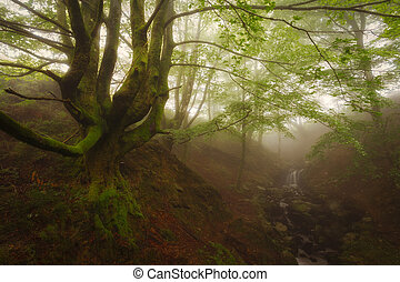 Ancient green forest in Gorbea Natural Park