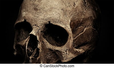 Ancient Human Skull Rotating Closeup Loop
