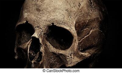 Ancient Human Skull Rotating Closeup Loop - Closeup of an...