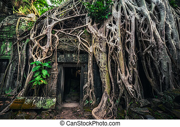Ta Prohm temple with giant banyan tree at Angkor Wat complex...