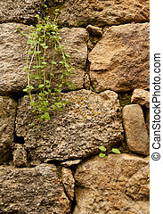 Ancient rock wall with plants