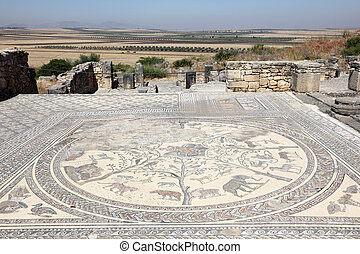 Ancient Roman mosaic in Volubilis, Morocco, North Africa