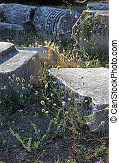 ancient ruins and wild plants