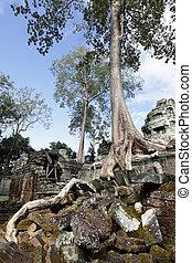 Ancient ruins at Angkor wat, Cambodia