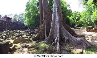 Ancient Ruins Near Angkor Wat In Cambodia, steadicam shot
