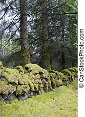 ancient stone walls covered in green moss - old stone walls...