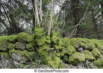 ancient stone walls covered in moss - old stone walls...