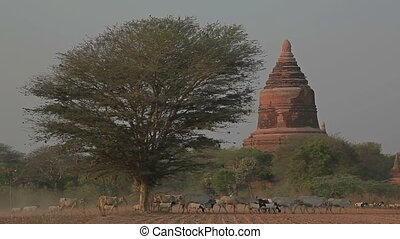 Ancient stupa in Old Bagan - Ancient stupa in the field at...