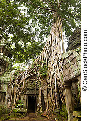 Ancient Ta Prohm or Rajavihara Temple at Angkor, Siem Reap,...