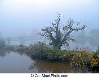 Ancient tree in mist in a flooded field near York, England