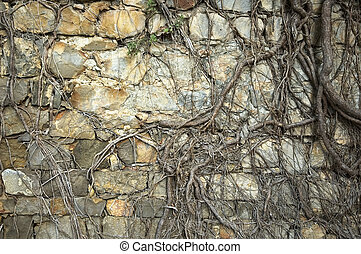 ancient wall with roots