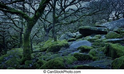 Ancient Woodland On Stormy Evening
