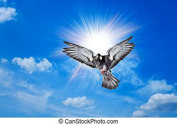 anděl, ptáček, nebe