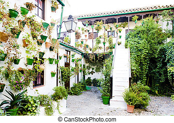 andalousie, cordoue, patio, (courtyard), espagne