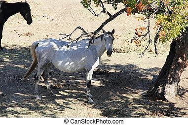 andalusian, caballo, en, pasto
