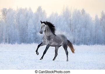 andalusian, caballo, invierno