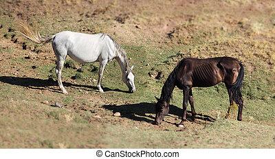 andalusian, caballos, en, pasto