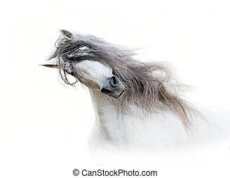 andalusian, cavallo, con, lungo, criniera, isolato, bianco